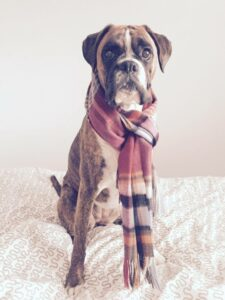 Tutor's dog wearing a scarf